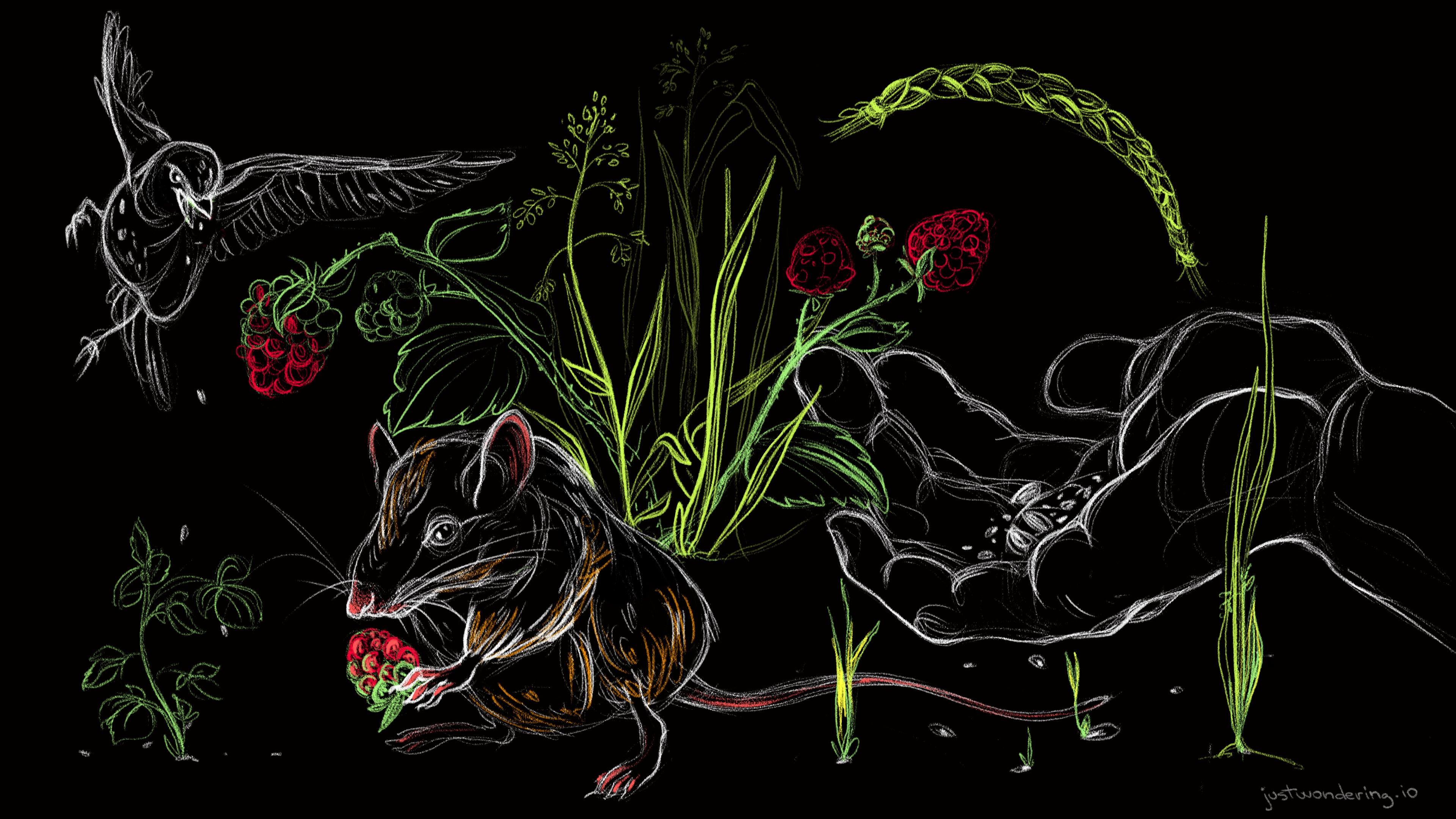 05-The Honourable Harvest - Robin Wall Kimmerer | just wondering
